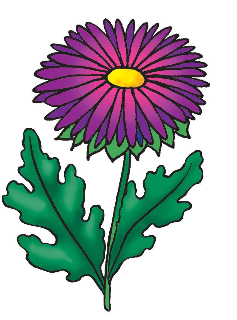 Как нарисовать хризантему: простой способ