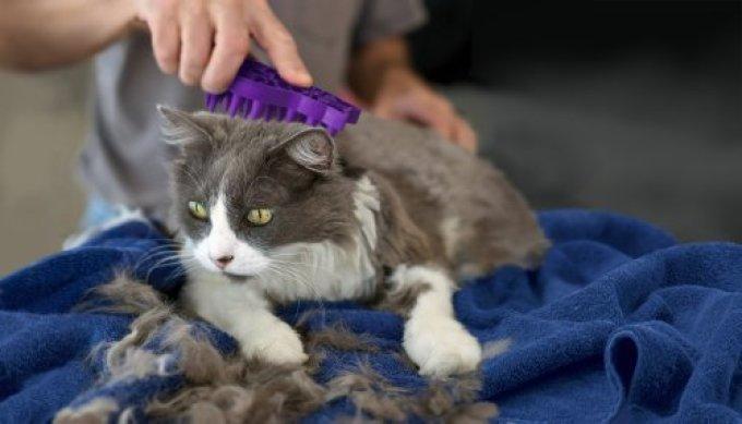 Кошку рекомендуется вычесывать дважды в неделю.