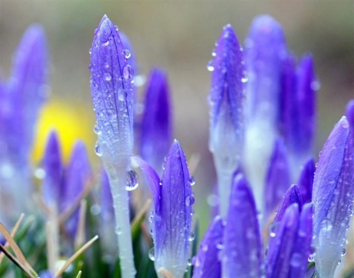 Весной все оживает