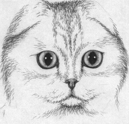 zatemnite-sherstku Как нарисовать котенка карандашом поэтапно для начинающих и детей? Как нарисовать котенка аниме с милыми глазками, мордочку котенка?