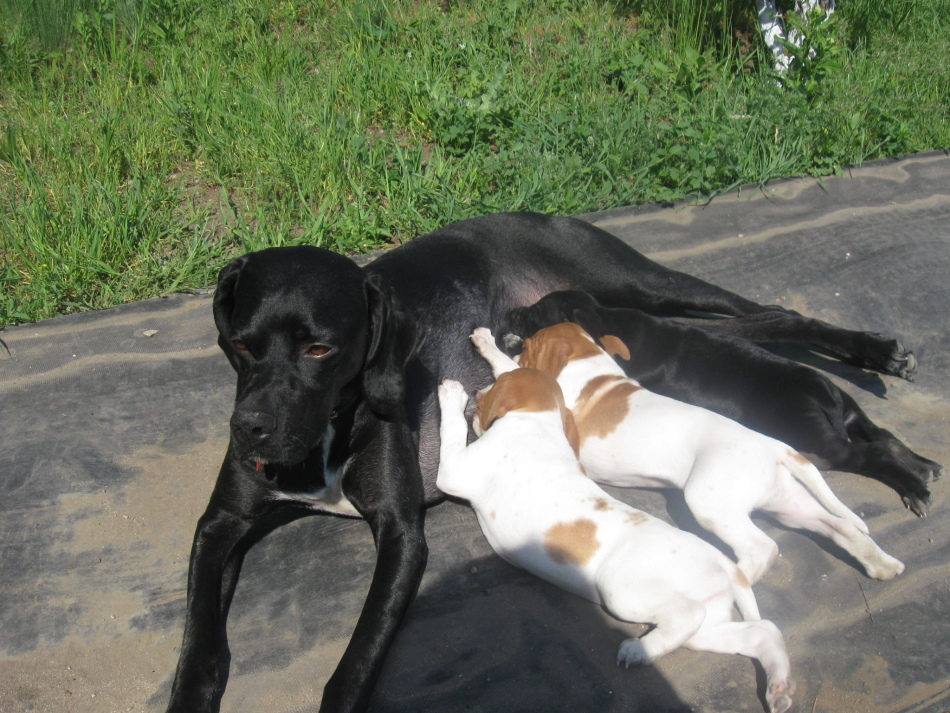 У щенков, которые питаются молоком матери, не бывает рахита