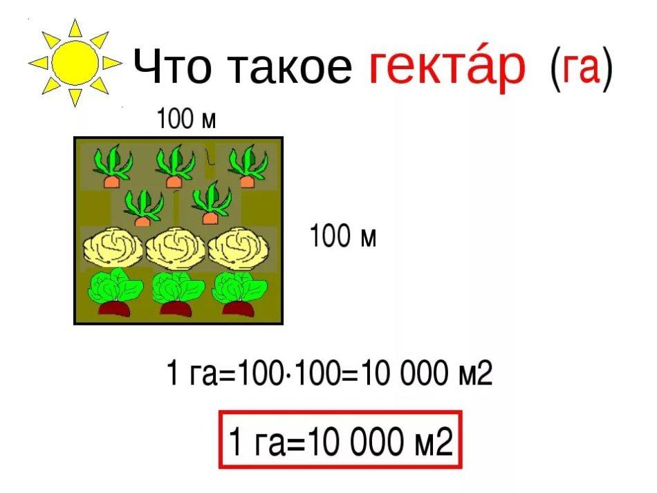 Что такое гектар?