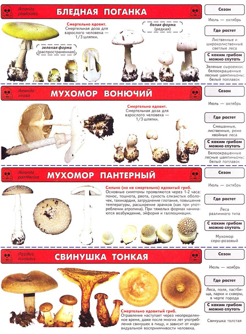 Список ядовитых грибов