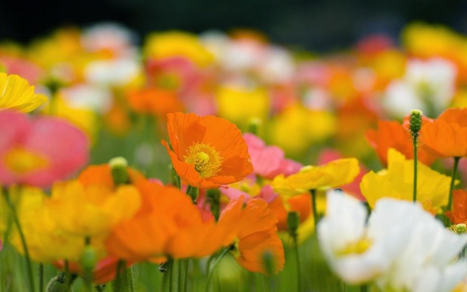 Луговые цветы оранжевого, розового, желтого и белого цвета
