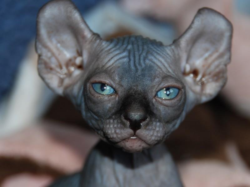 Кот без усов