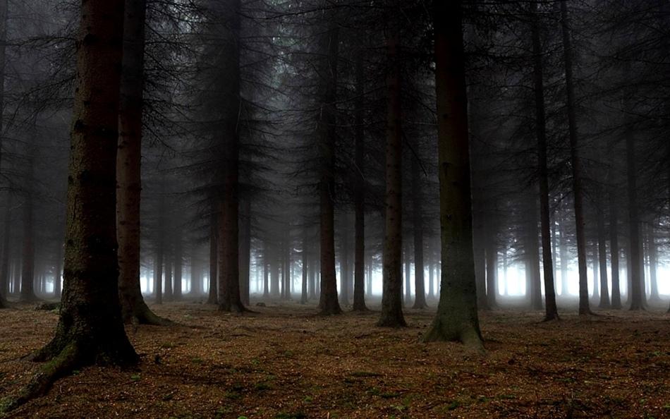 Приснившийся темный лес предупреждает о надвигающейся болезни.