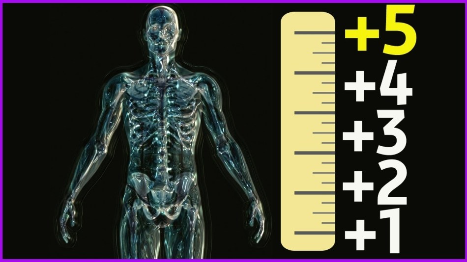 Рост скелета человека