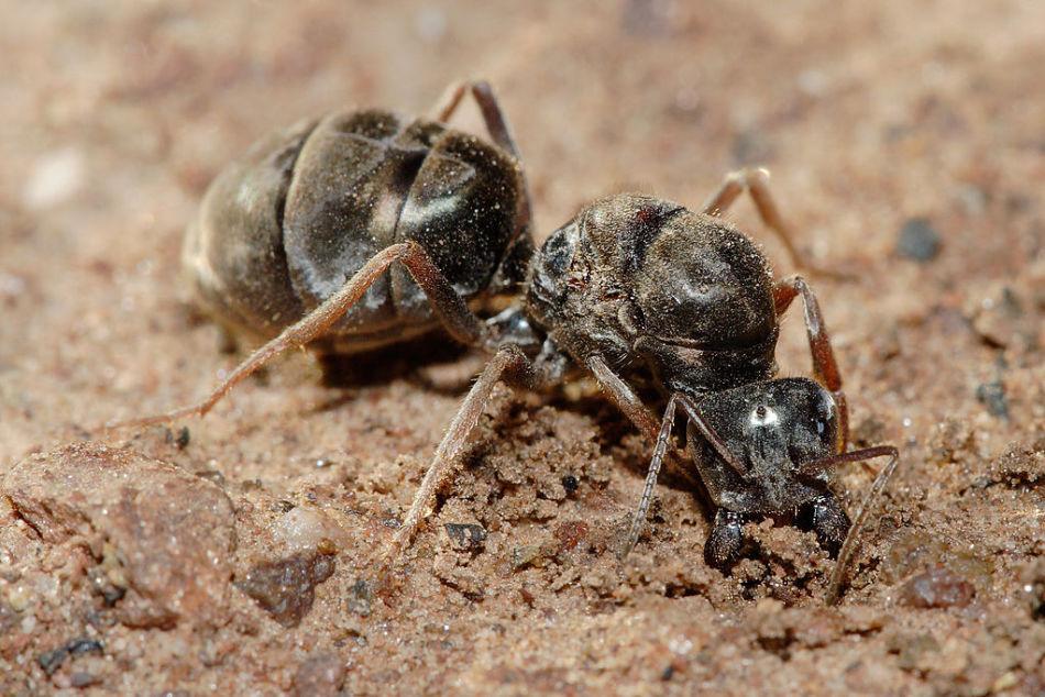 Основание муравейника