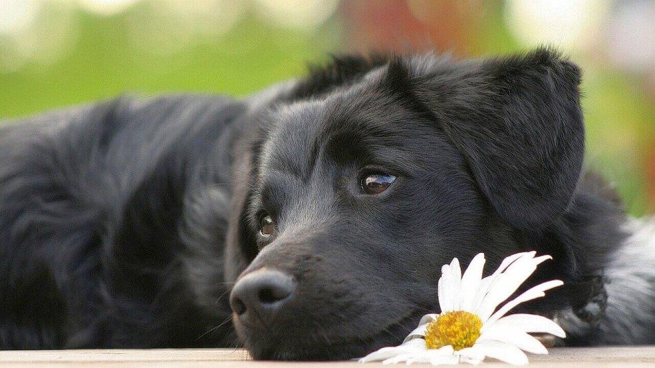 Имена для черных собак