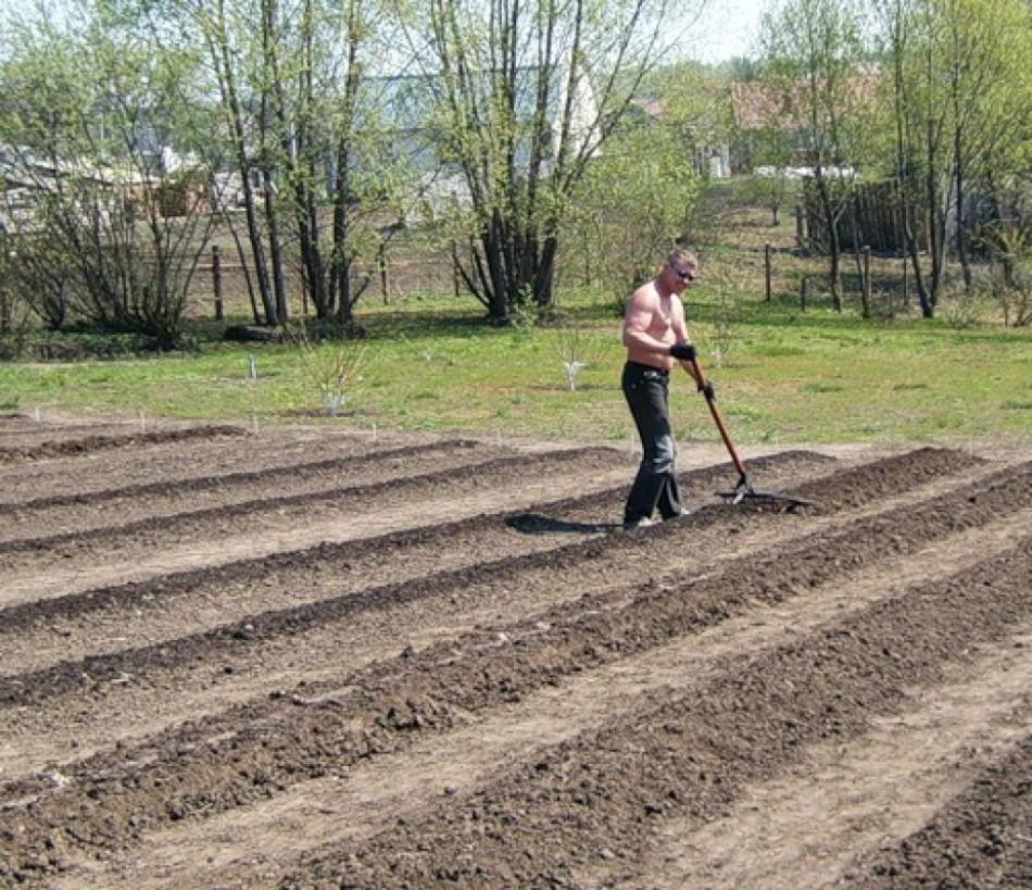 Подготовка грядки под посев лука
