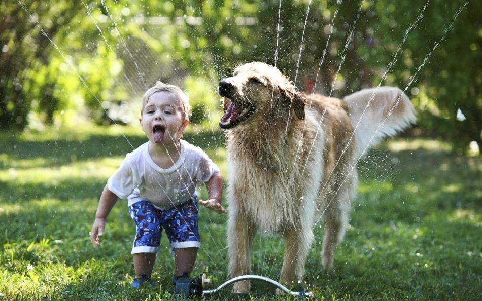 Ретривер дяя детей является лучшим компаньоном и товарищем по играм