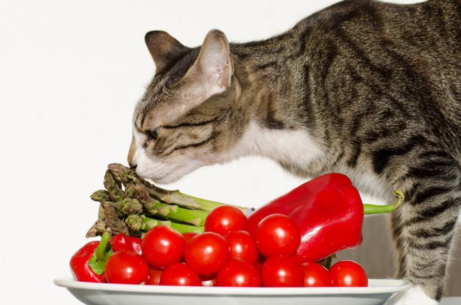 Полезное питание полезно и кошкам.