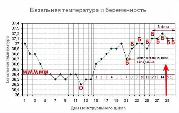 График, демонстрирующий наличие оплодотворения