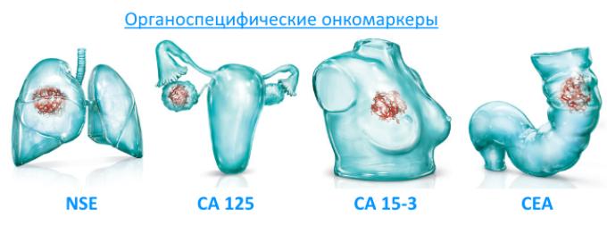 Онкомаркеры 5