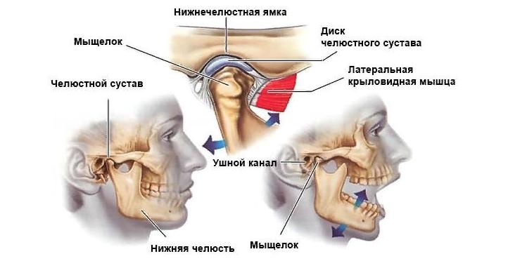Кости нижне-челюстного сустава