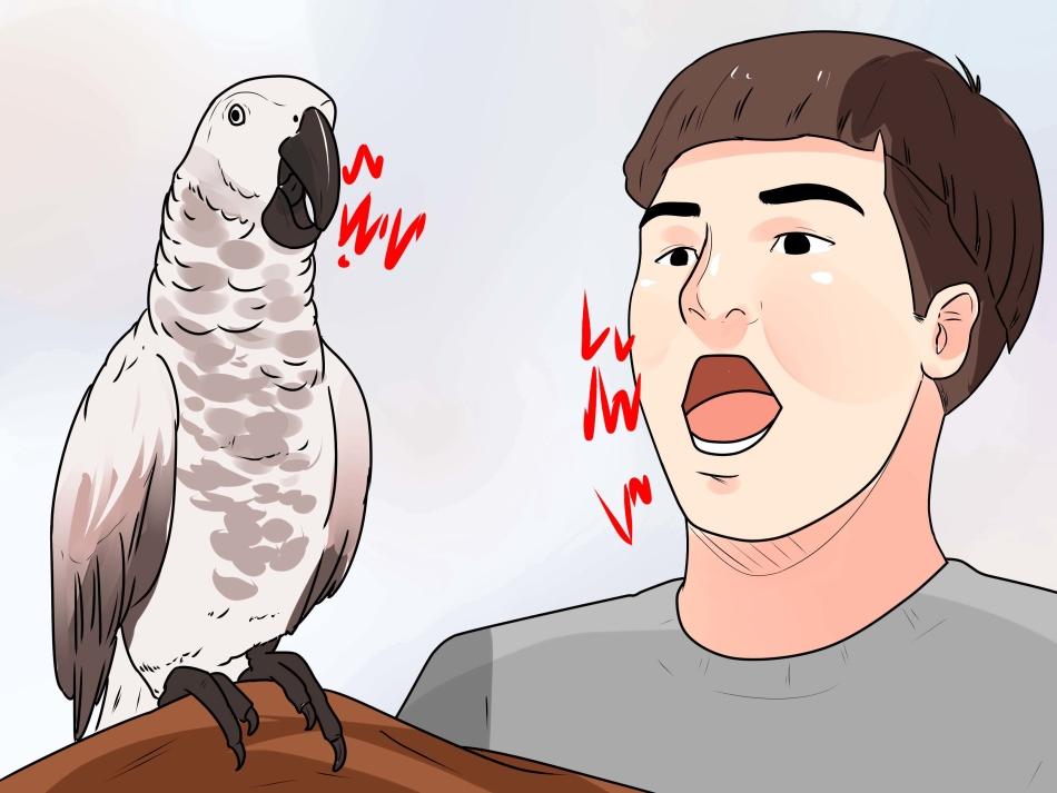 Попугай предпочитает всё же устраивать диалог с хозяином