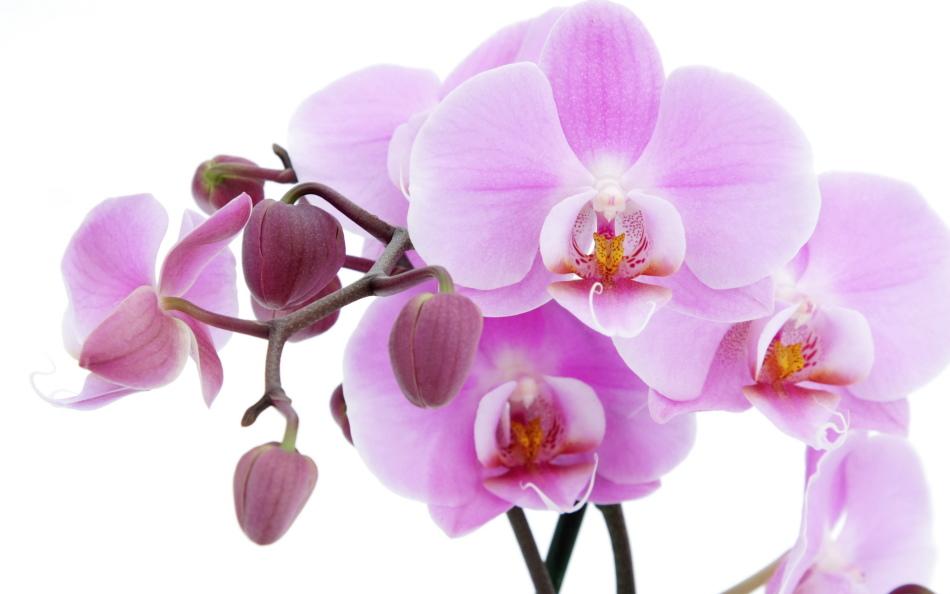 Благоприятные дни для комнатных растений и цветов в декабре