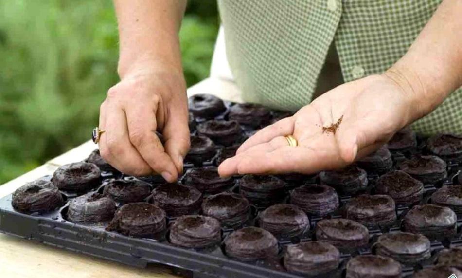 Мужчина высаживает семена в торфяные горшочки