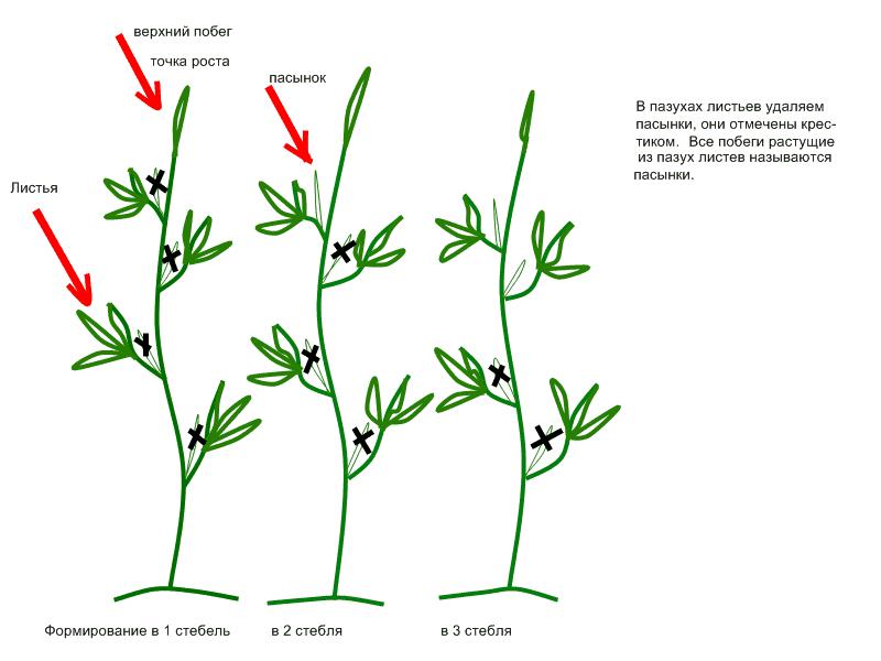 Формирование в несколько стеблей