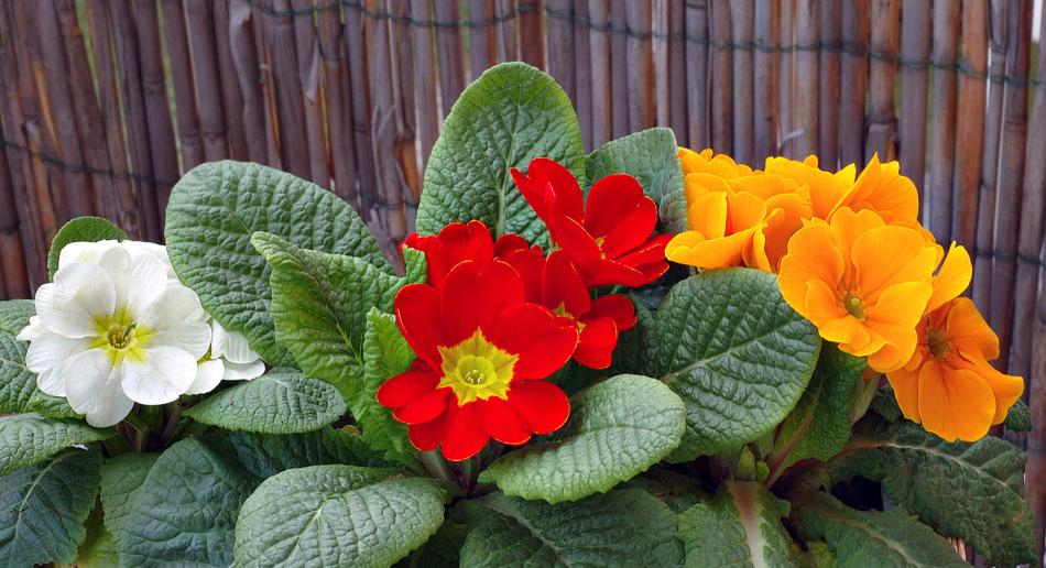 Лунный календарь для комнатных растений и цветов