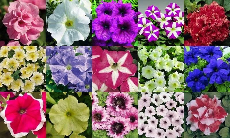 Цвет может быть разнообразным