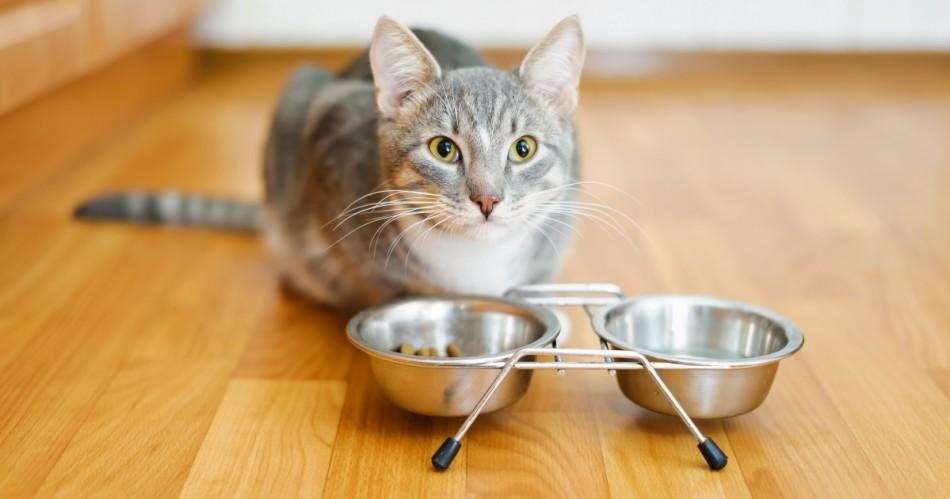 Ветеринары советуют не кормить кошек всем подряд.