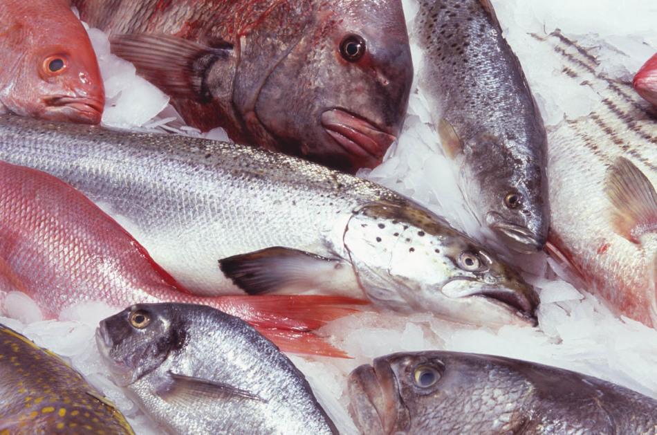 Как выбрать качественную рыбу для прикорма