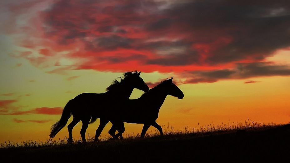 Сновидения про лошадь