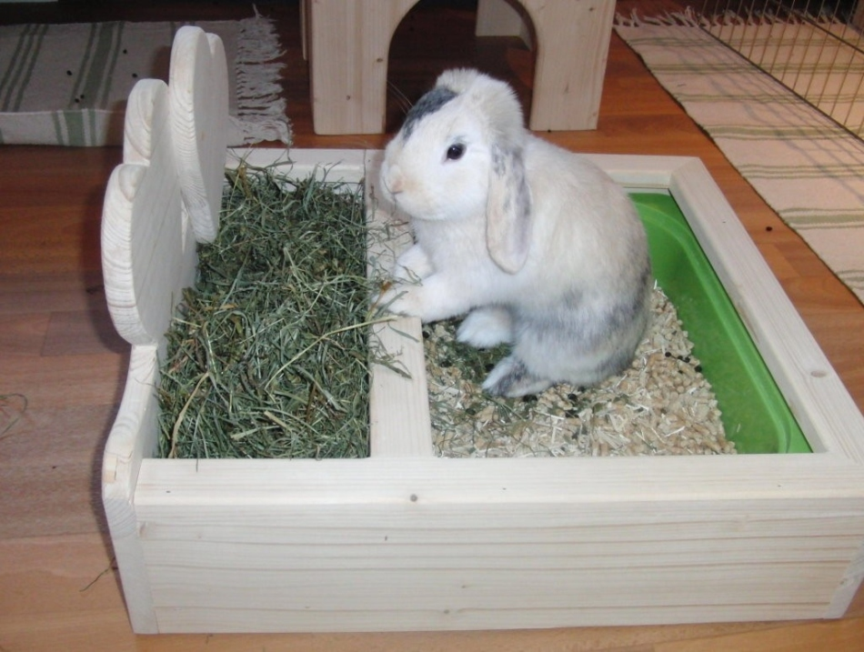 Приучить декоративного кролика к туалету удастся достаточно быстро