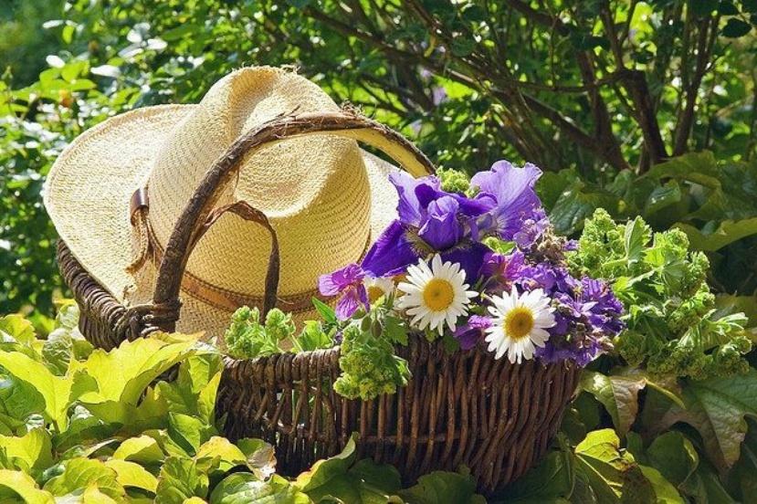Июнь и огород