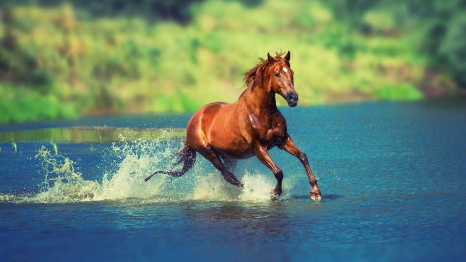 Сон: лошадь