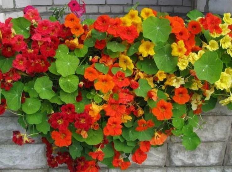 Растение отлично растет в тени, но все же свет должен радовать цветок хоть иногда