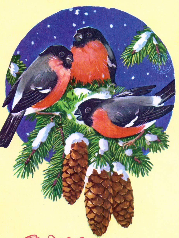 новогодние птички картинки здесь чуть-чуть