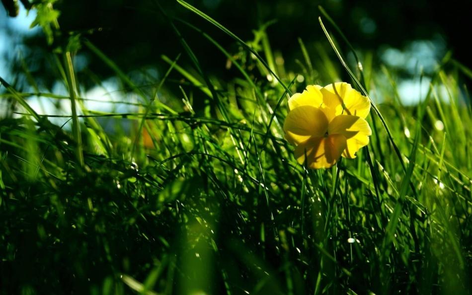 Трава и цветок