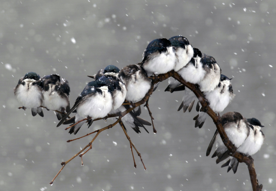 Особенности вредной пищи для птиц зимой