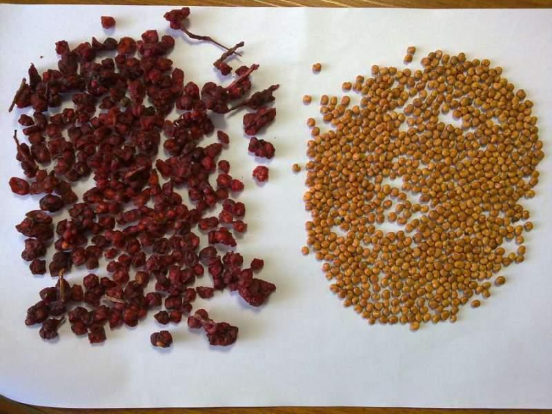 На листе на столе рассыпаны семена и сухие плоды лимонника