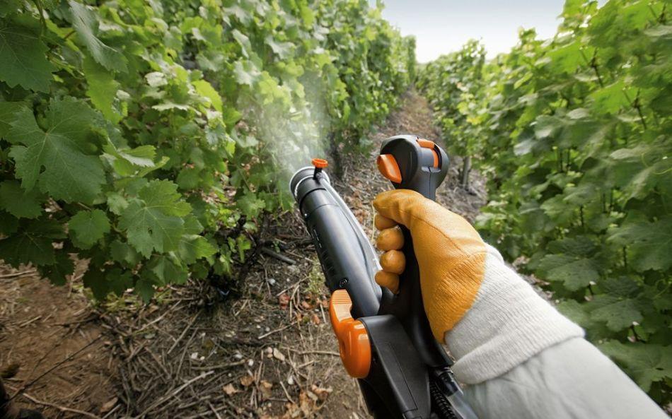 Обработка винограда