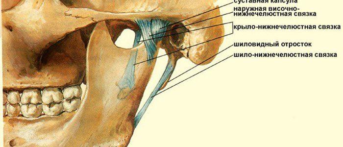 Кости, суставные поверхности внчс