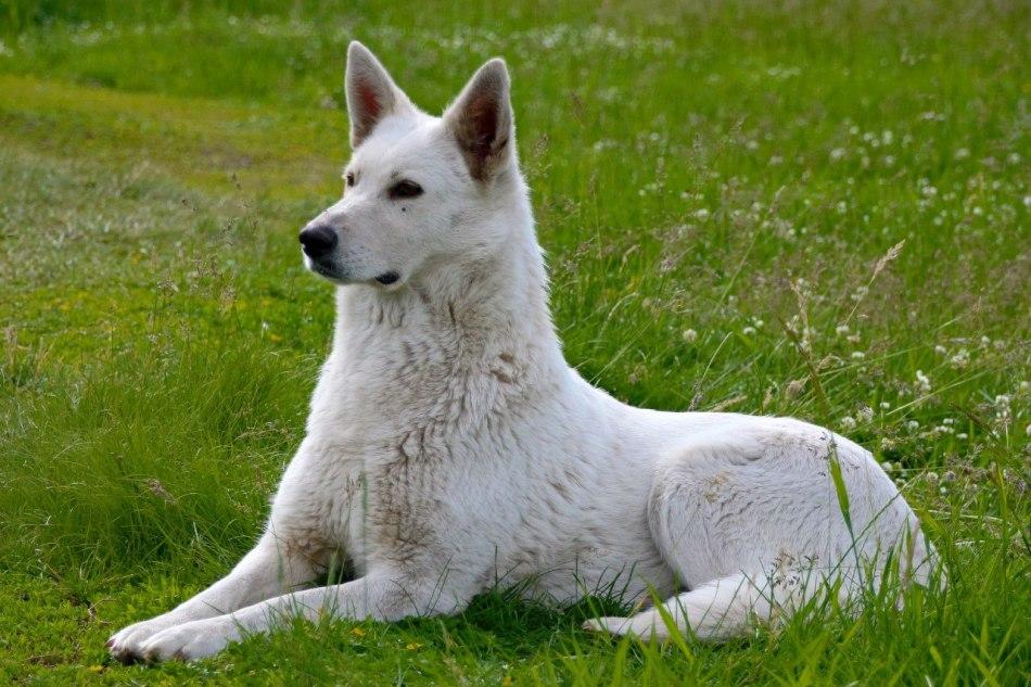 Имена для белых собак