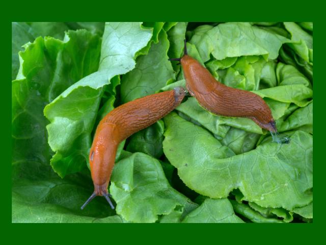 Как избавиться от гусениц на капусте народными рецептами и препаратами