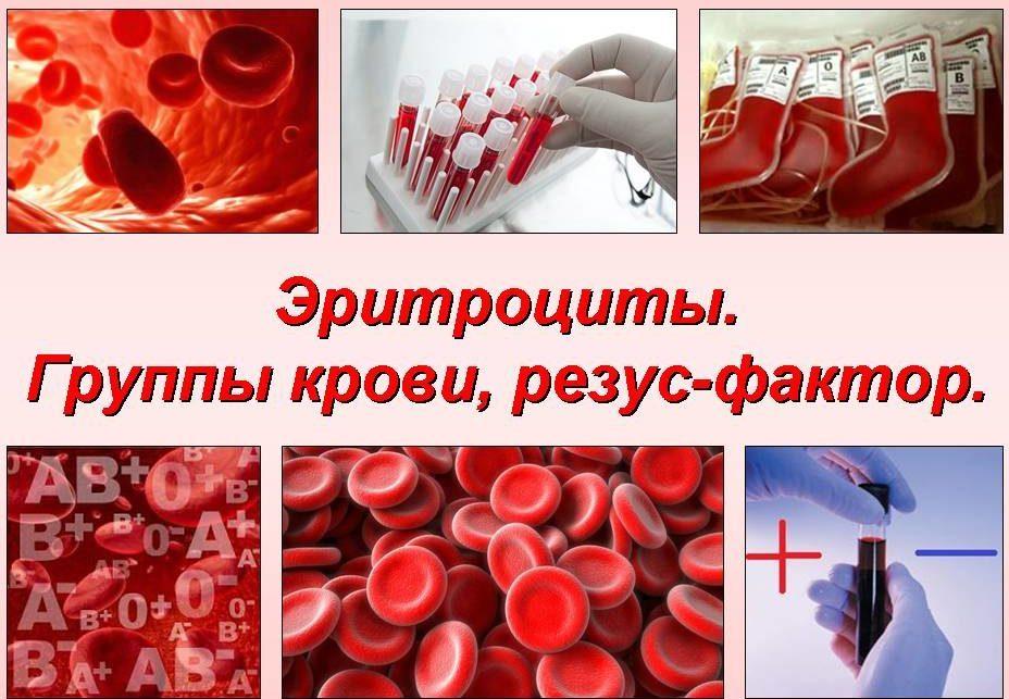 Какие бывают группы крови?