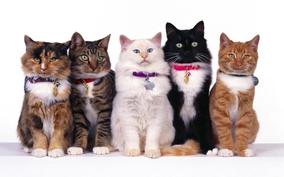 Разноцветные кошки
