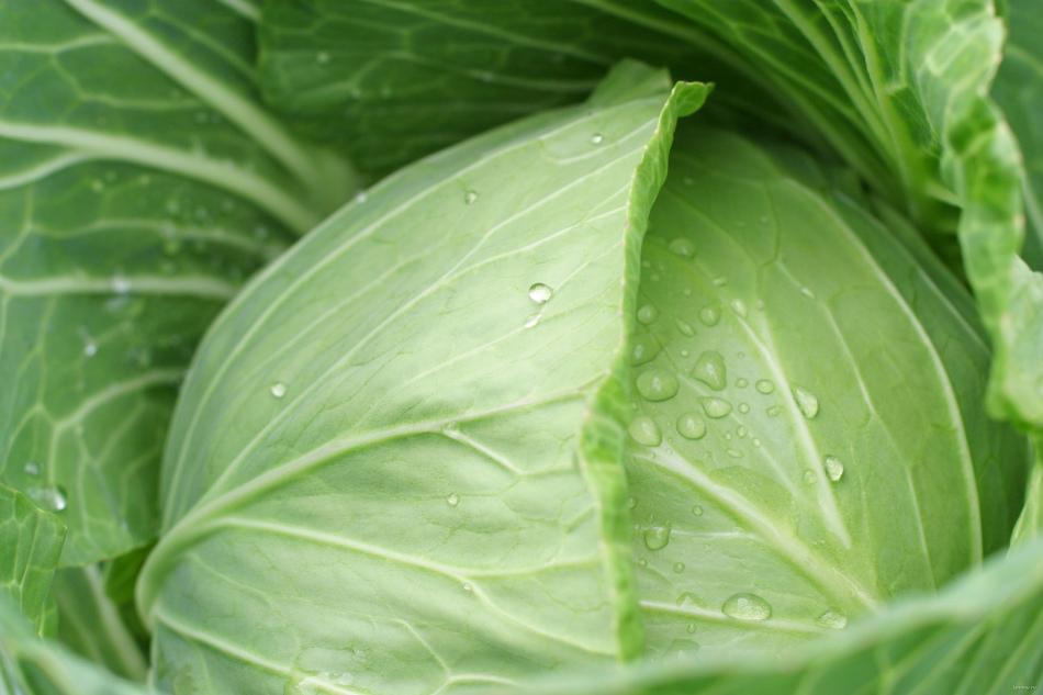 Капустный лист поможет избавиться от шишек после уколов