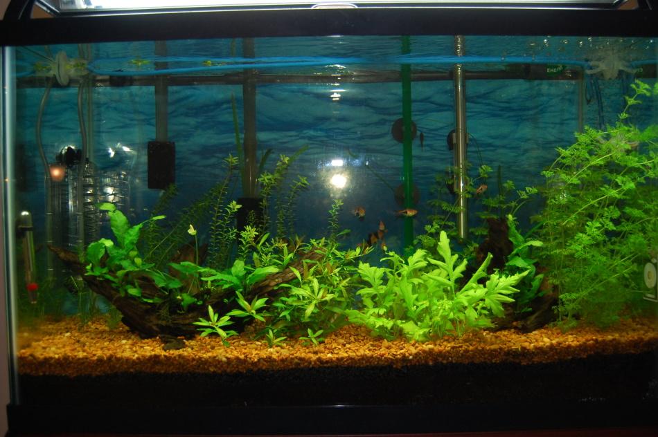 Зеленая вода в аквариуме