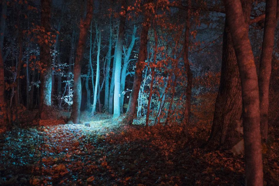 Ночной лес во сне обещает перемены в личной жизни.