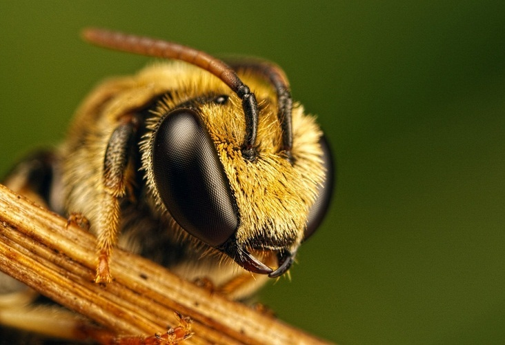 Миллер увидел в пчеле хороший знак