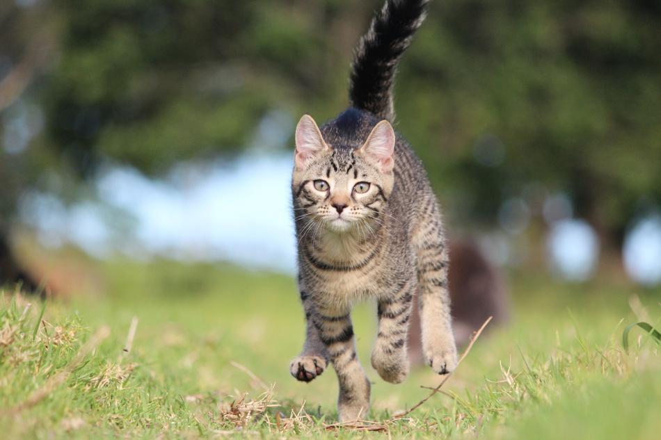 Кошки неплохо бегают