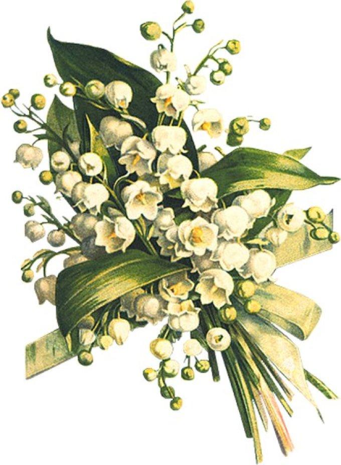 для комнатных цветы картинки ландыши открытки признаки шизофрении