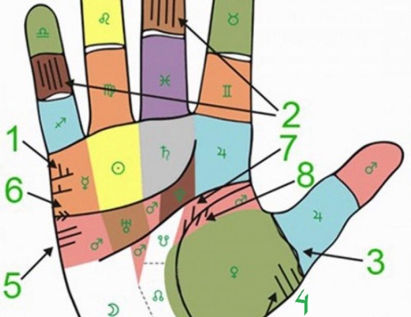 Пример-иллюстрация расположения линия на руке