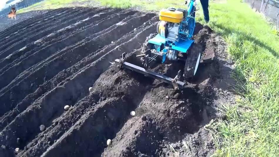 Мотоблок для выращивания картофеля